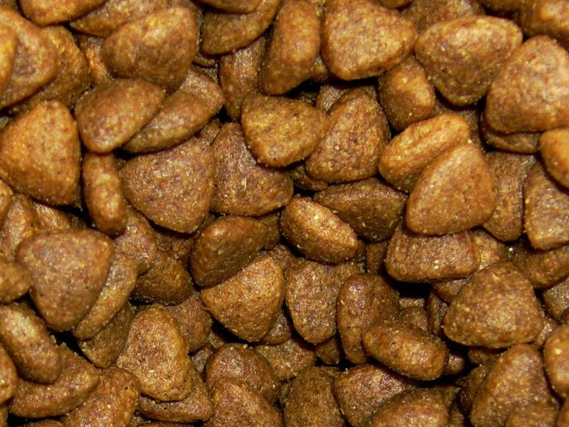 makanan kucing jenis kering