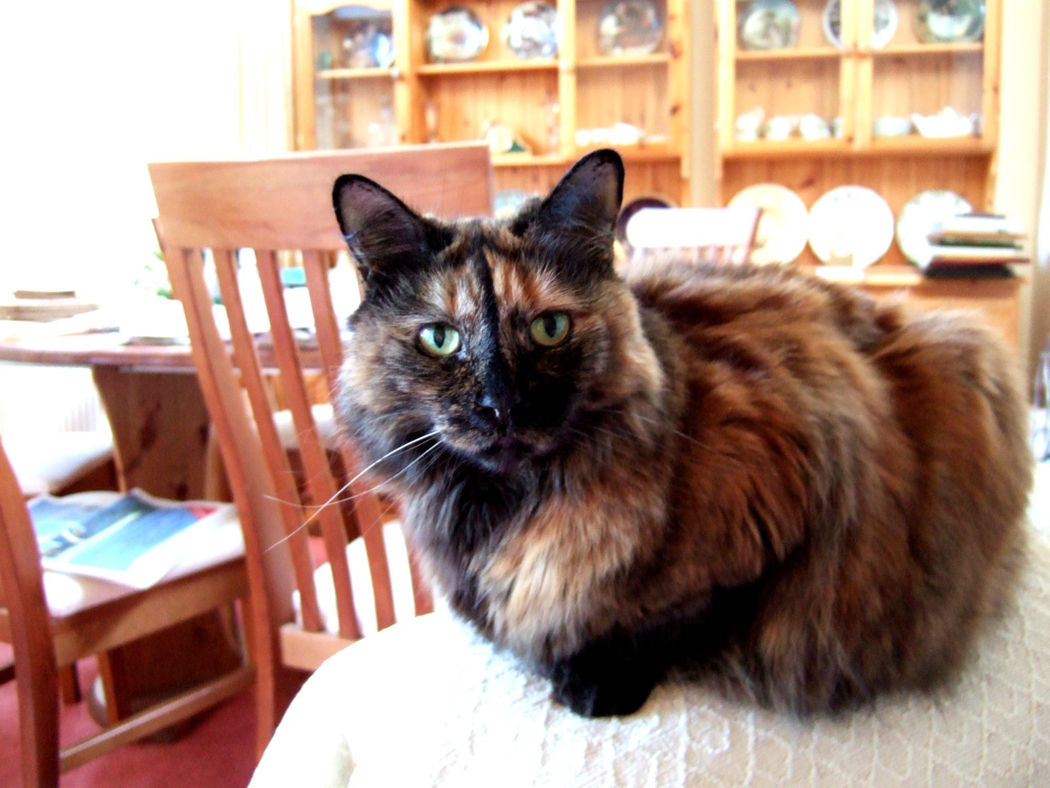 penyakit dan pengobatan asma pada kucing