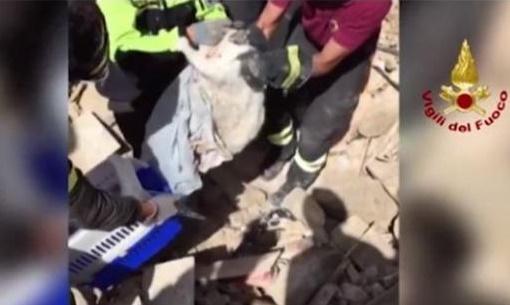 kucing di rerentuhan gempa bumi Italia