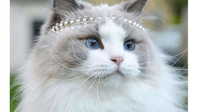 kucing tercantik princess aurora