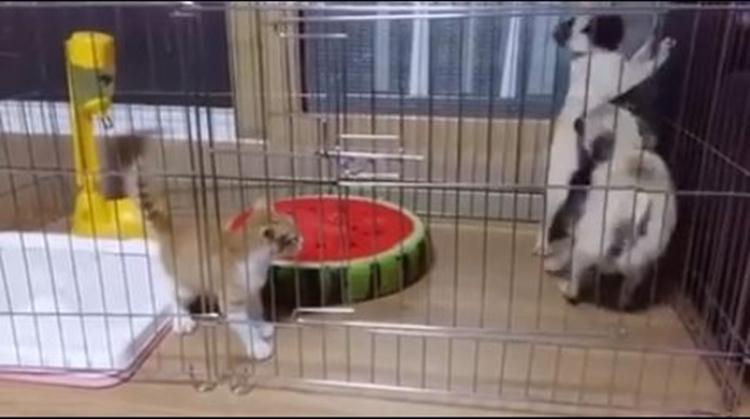 video bukti kalau anjing takut kucing2