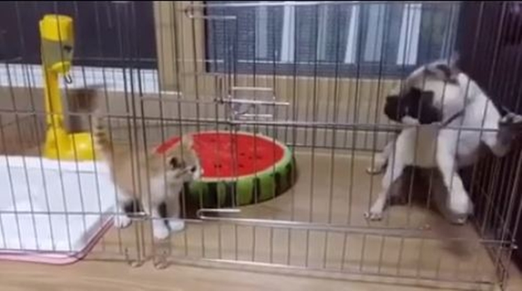 video bukti kalau anjing takut kucing3