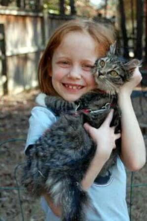 kucing-american-bobtail-lh-391