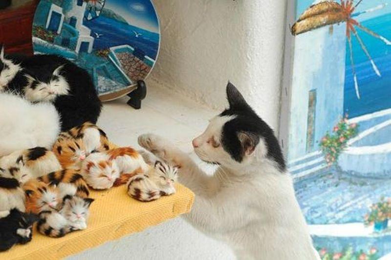 makanan-kucing-aegean-1