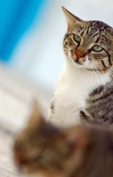 makanan-kucing-aegean-3
