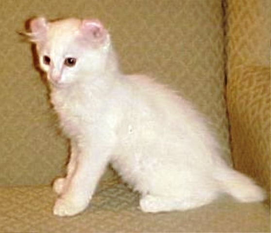 makanan-kucing-alpine-lynx-10