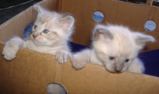 makanan-kucing-alpine-lynx-8
