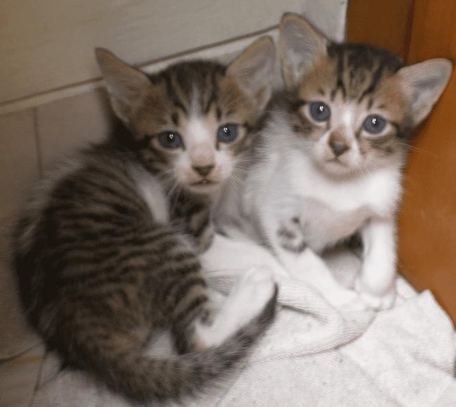 harga kucing kampung