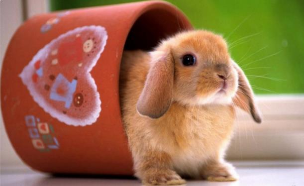 Kelinci Cantik