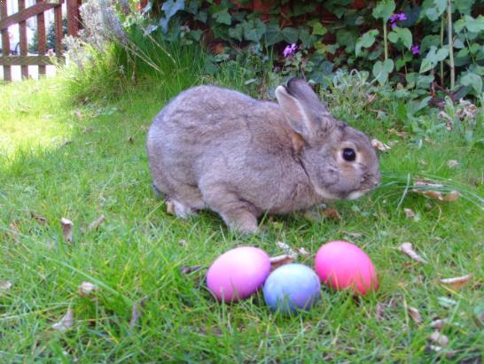 Kelinci Paskah