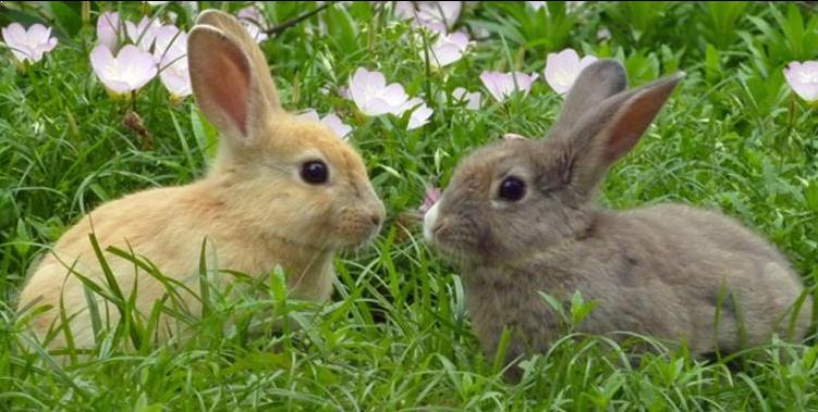 Kelinci Imut dan Cantik 2