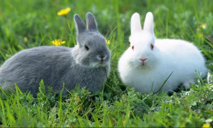 Kelinci Imut dan Cantik