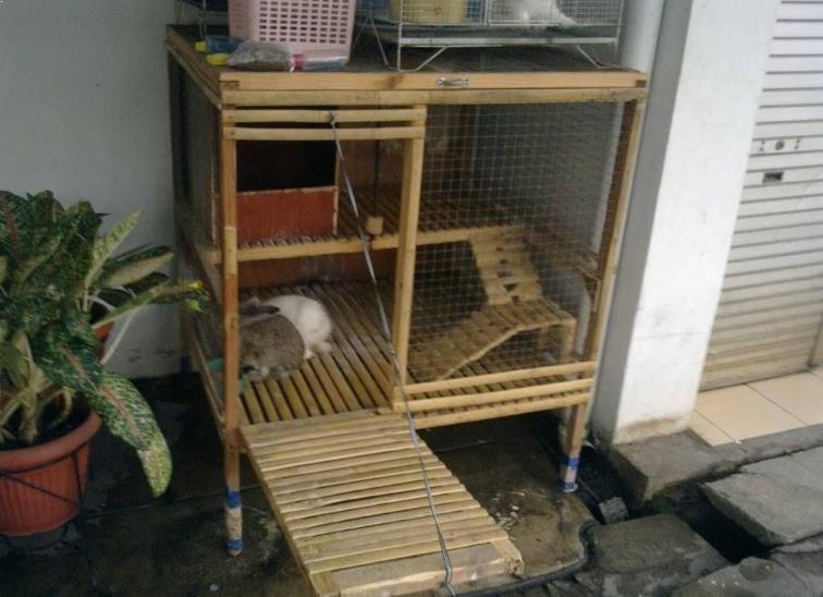 Kandang Kelinci dari Bambu 2