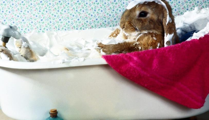 Cara Memandikan Kelinci