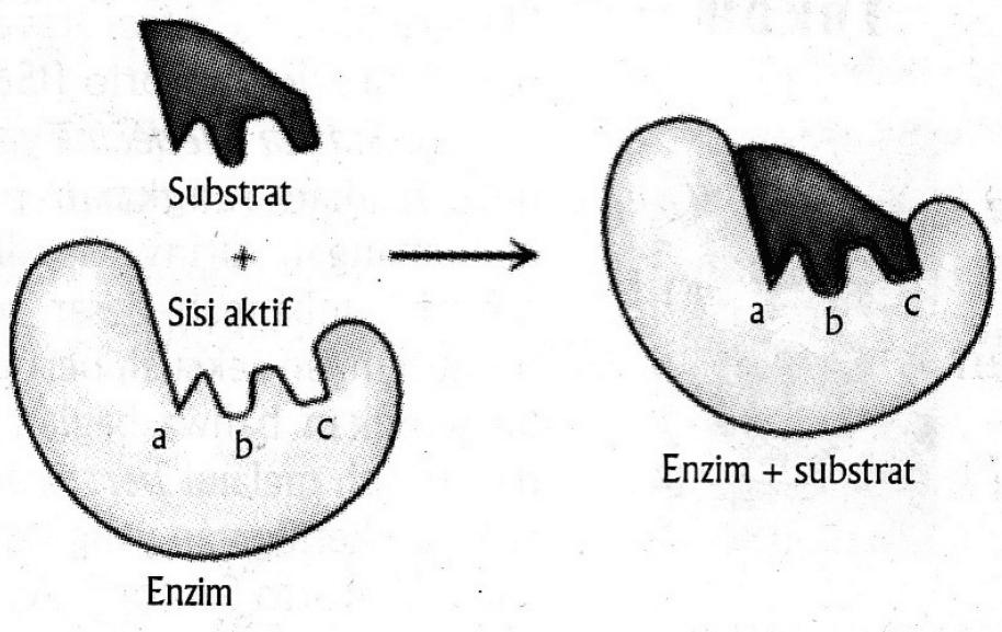 Denaturasi Enzim