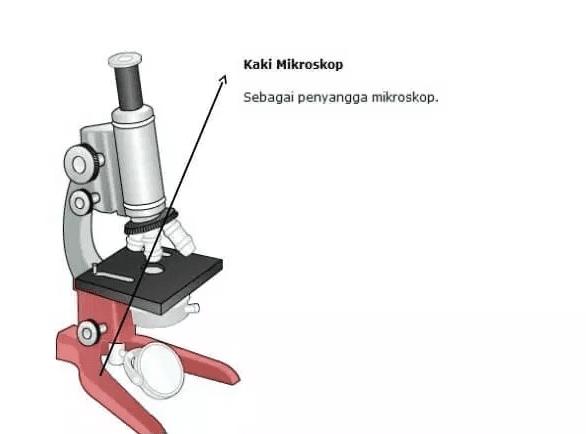 Bagian Kaki Mikroskop
