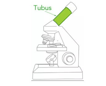 Bagian Tabung Mikroskop (Tubus)