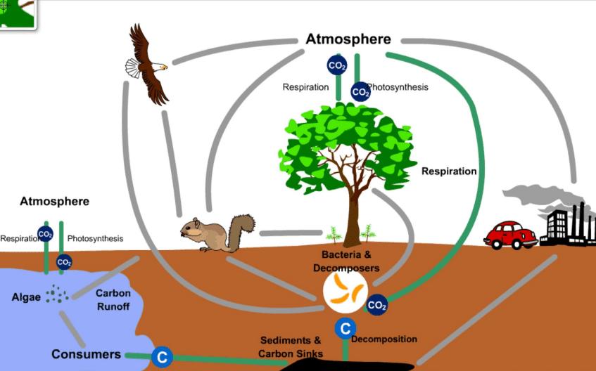 Daur Biogeokimia Karbon